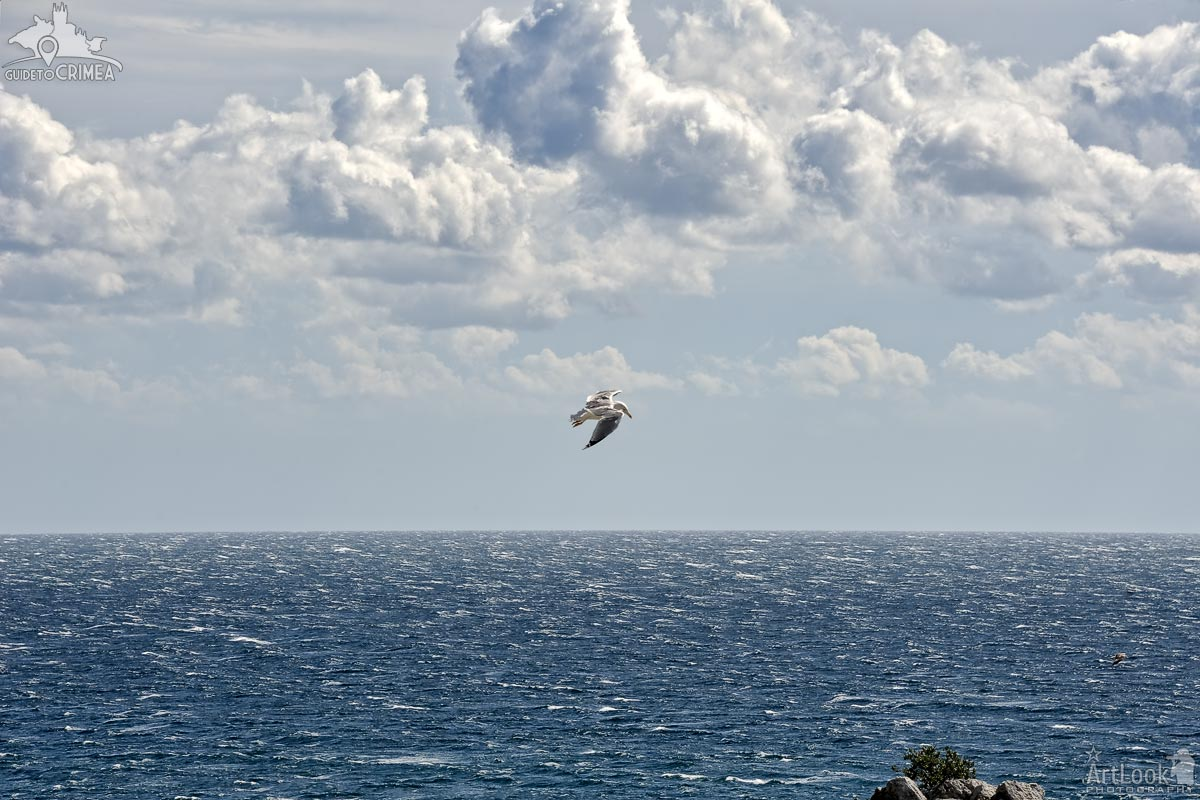 Seagull Flying in Cloudy Sky Over the Black Sea
