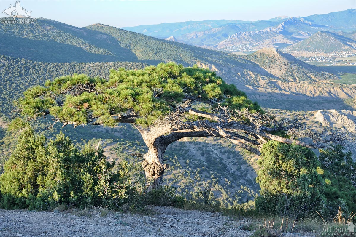 Wish Tree on the Slope of Mount Sokol