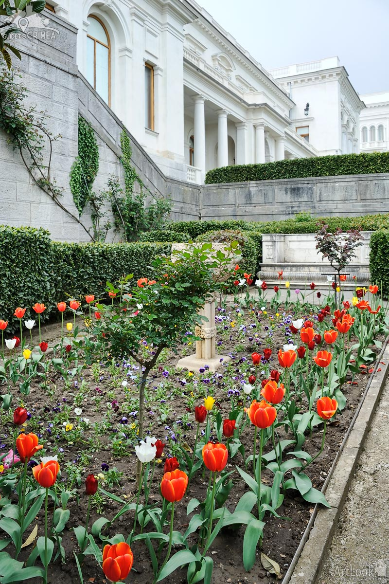 Colorful Tulips at Livadia Palace
