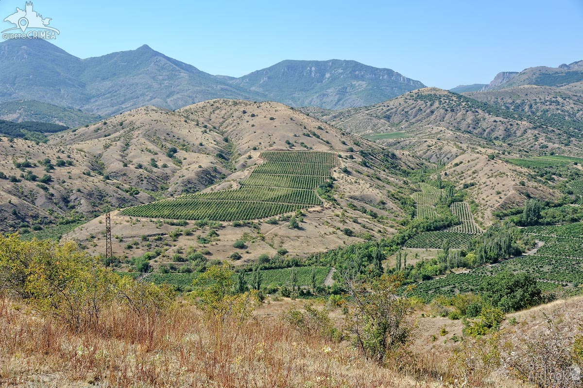Alushta Vineyards in Crimean Mountains